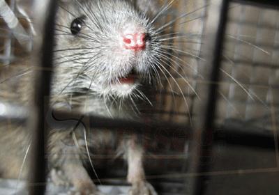 Control de roedores en empresas
