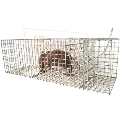 estacion captura para rattus rattus y rattus norvegicus
