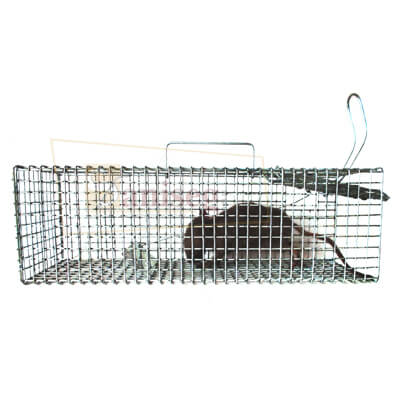 tomahawk para ratas